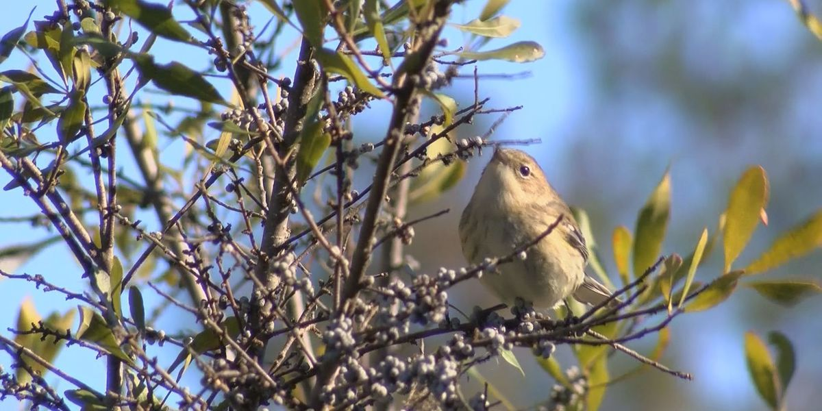 Some animals thrive while others struggle in South Mississippi cold snap
