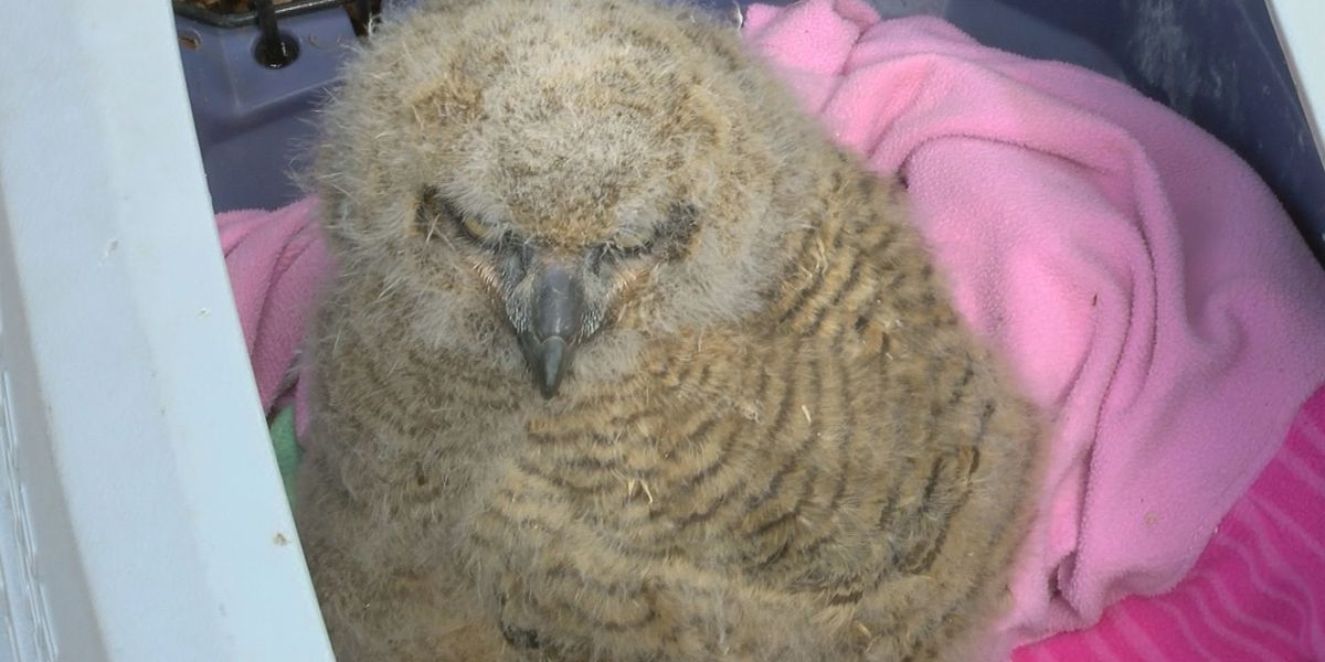 Gulfport Fire Department helps rescue stranded baby owl