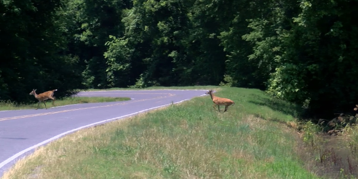 MDOT reminding drivers of deer safety tips