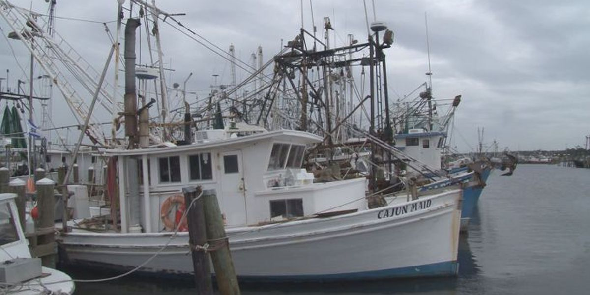Oyster season could reopen by next week