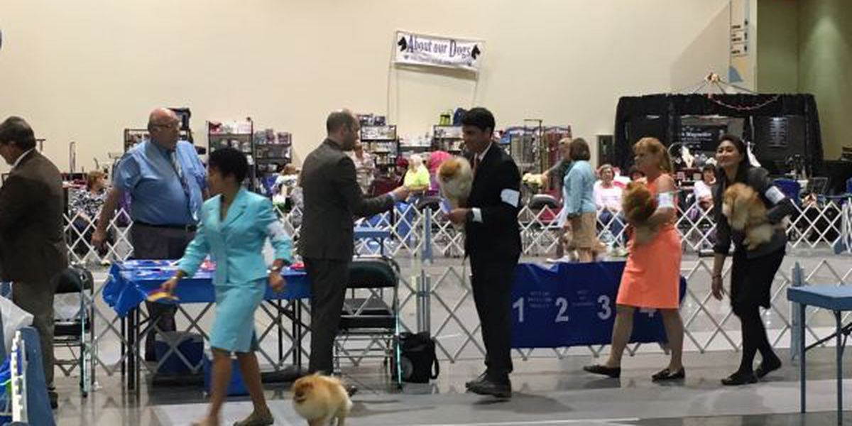 Dog show brings pampered pets, and economic boost to Coast
