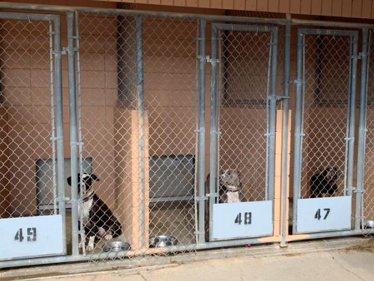 Jackson County Animal Shelter prepares for demolition