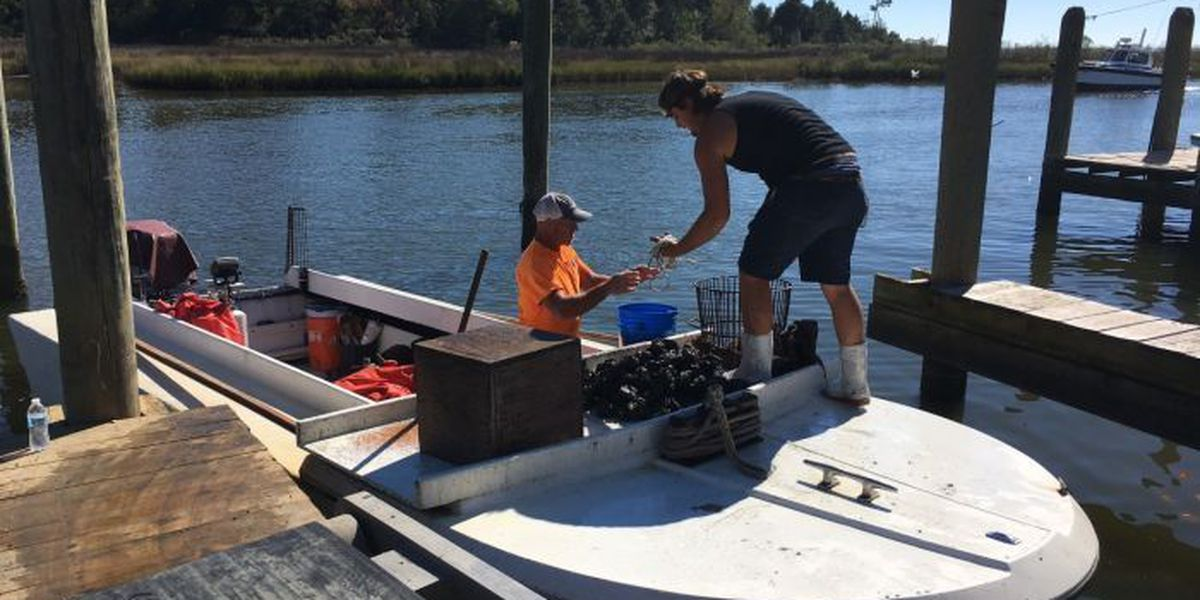 Biloxi Bay oyster reefs closed less than a day after reopening