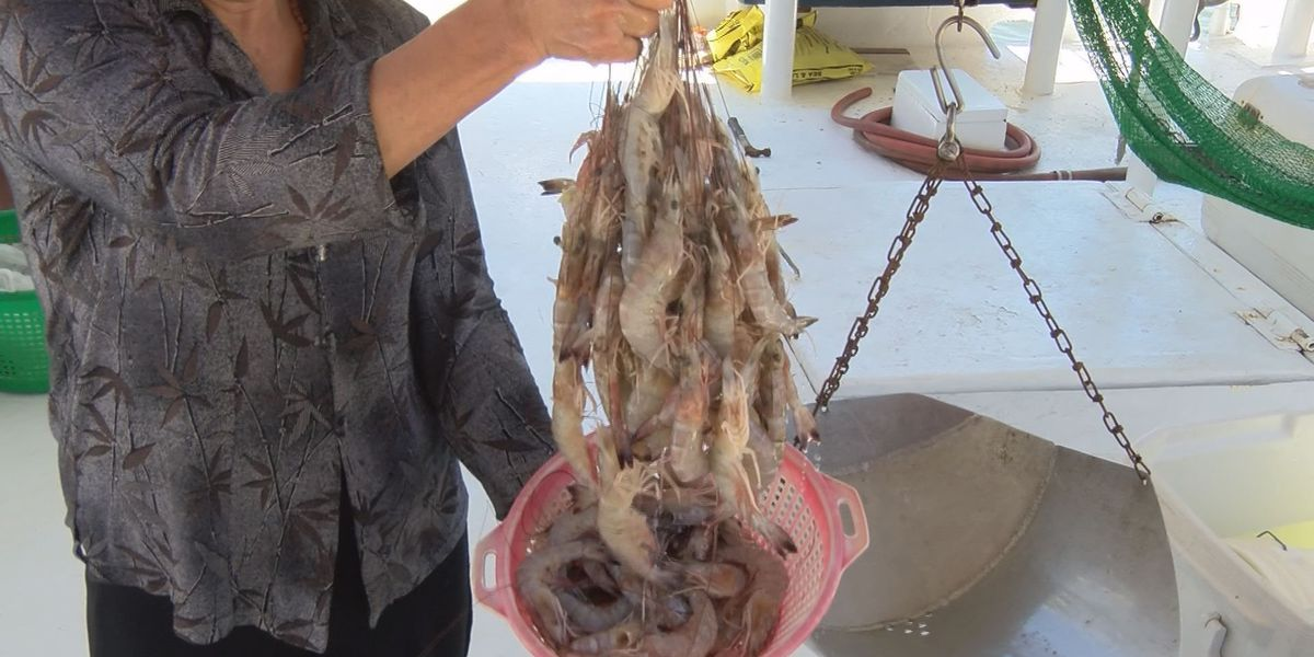 Shrimpers optimistic for upcoming season in state waters