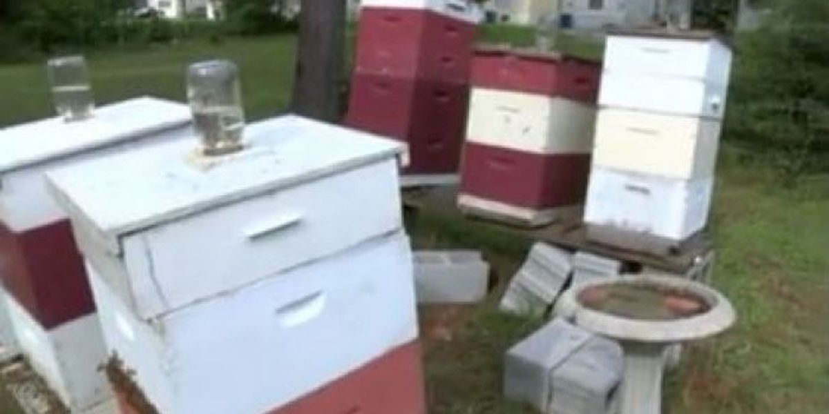 Lucedale beekeeper may be forced to get rid of her hives