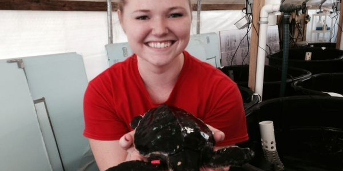 Dozens of Northeast turtles recovering at IMMS in Gulfport