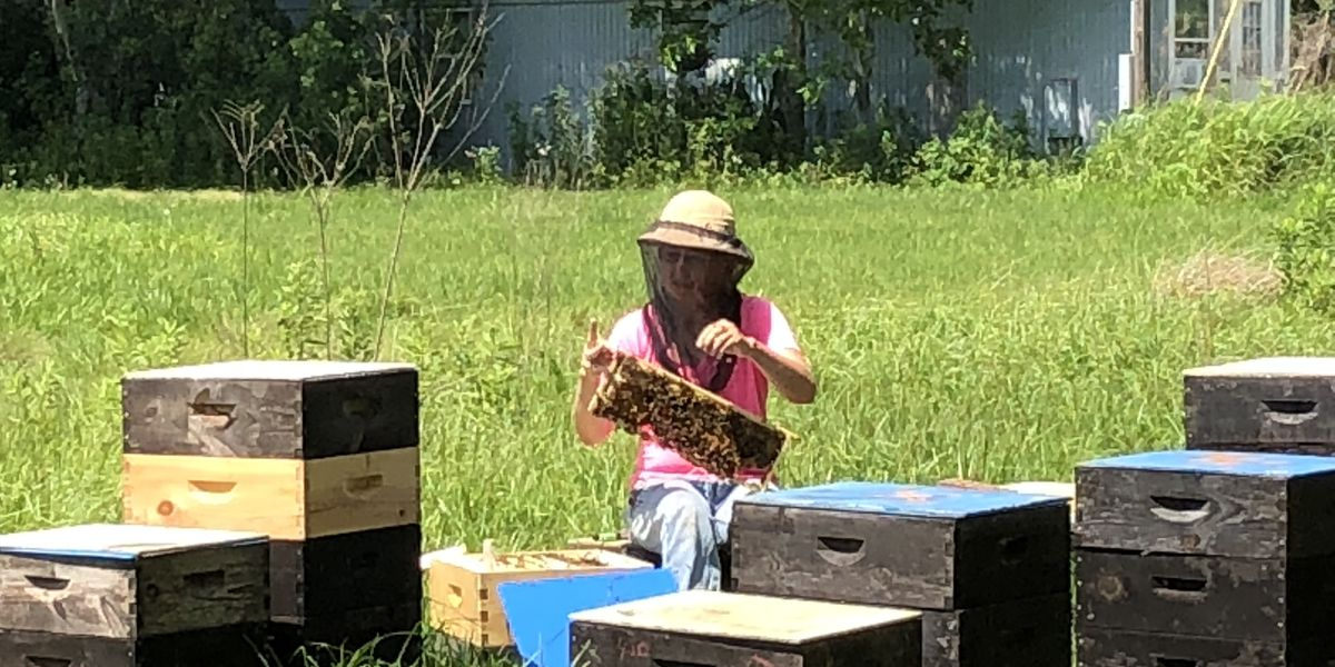 Raising premier queen honey bees in Mississippi