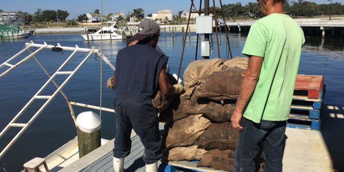 Fisherman return to oyster reefs in time for Thanksgiving