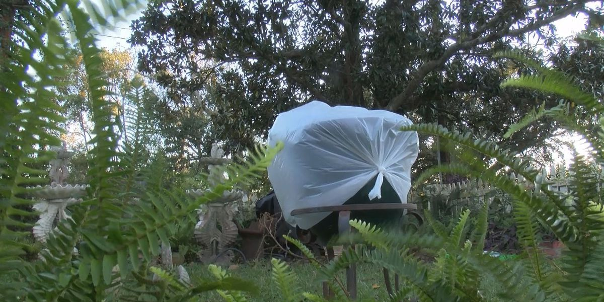 South Mississippi gardeners protect plants ahead of colder months