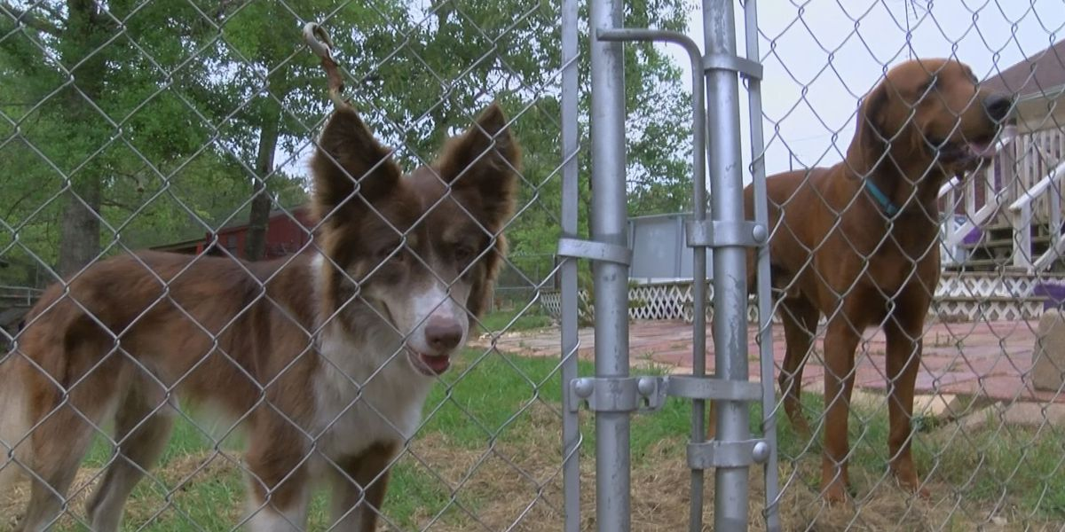 Shuckers team up with Jackson Co. animal shelter