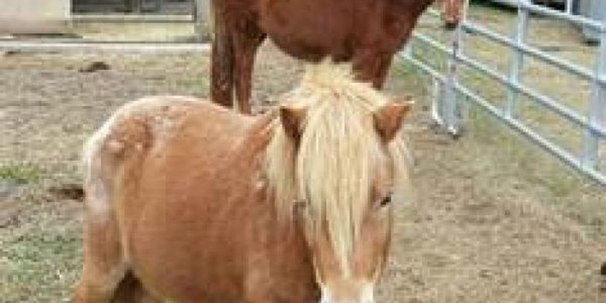 Pigs, horse and pony ready for adoption in Jackson Co.