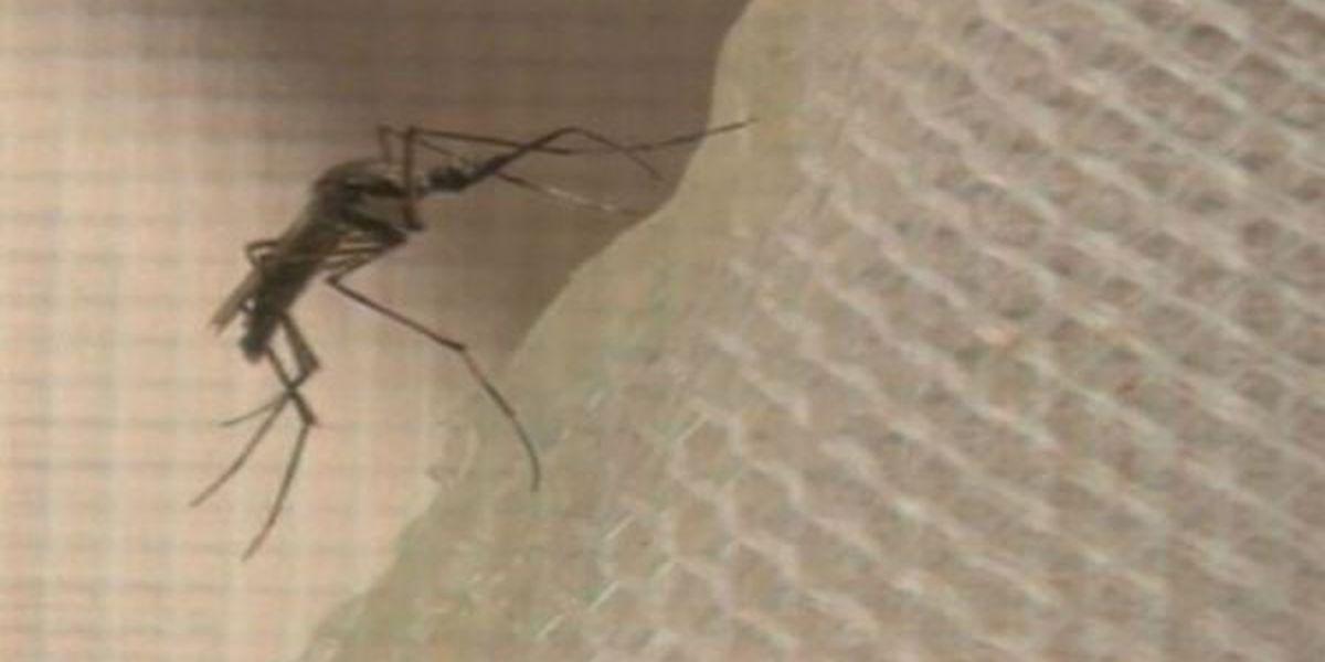 Zika virus concerns discussed in Gulfport