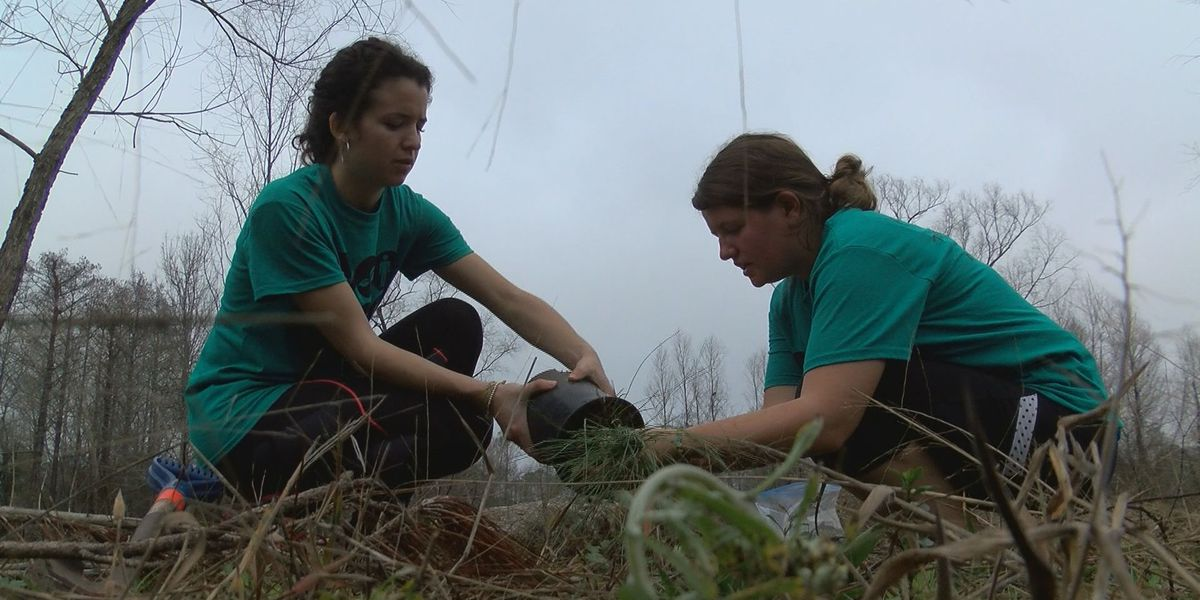 New York college students plant trees for Turkey Creek land restoration project