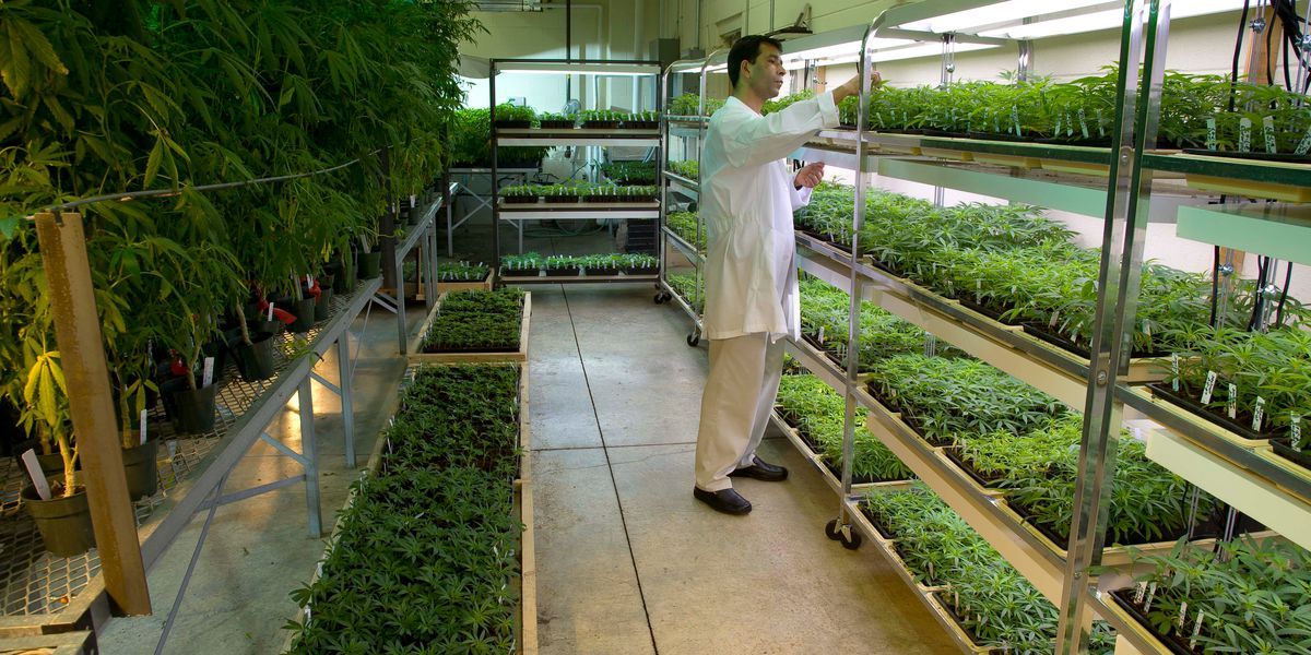 CBD drug trial at UMMC delivers promising results; gets one-year extension