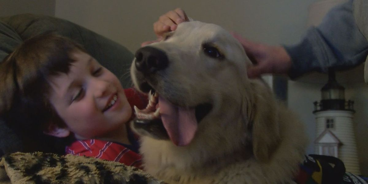 Ocean Springs boy adjusts to life with service dog