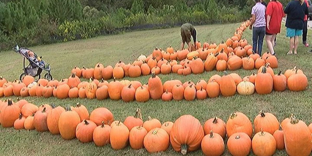 Church of the Redeemer continues pumpkin patch tradition