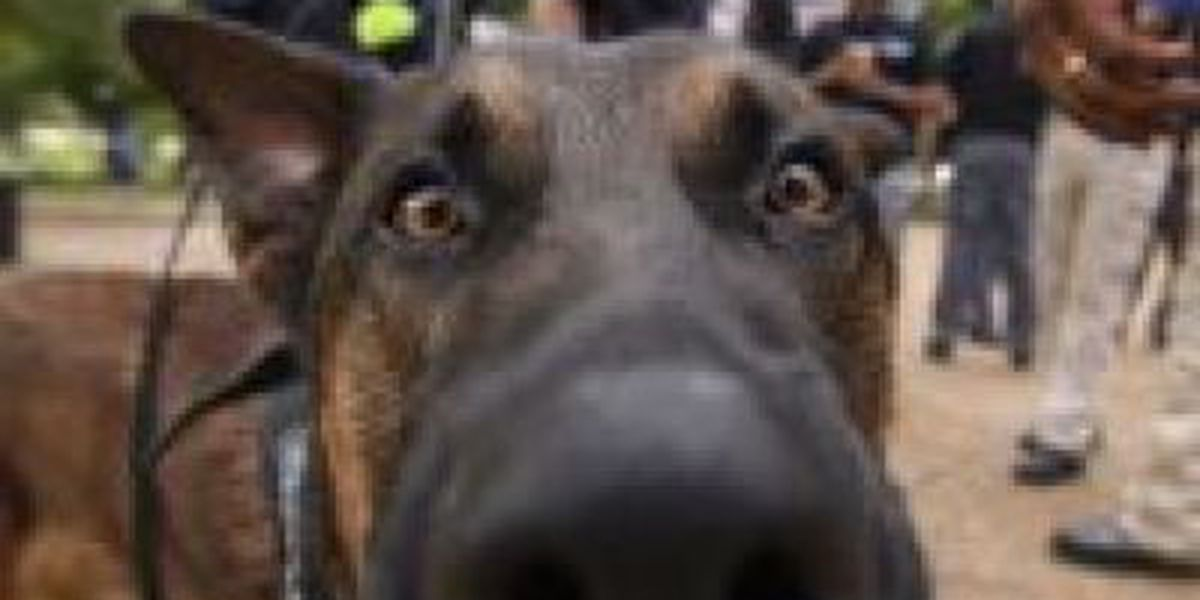 K-9 officer sniffs out contraband at Ole Miss