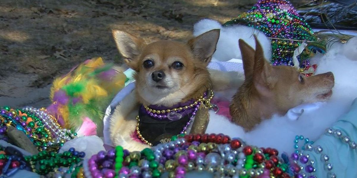 Krewe of Pupseidon has chilly kick off to Carnival parades