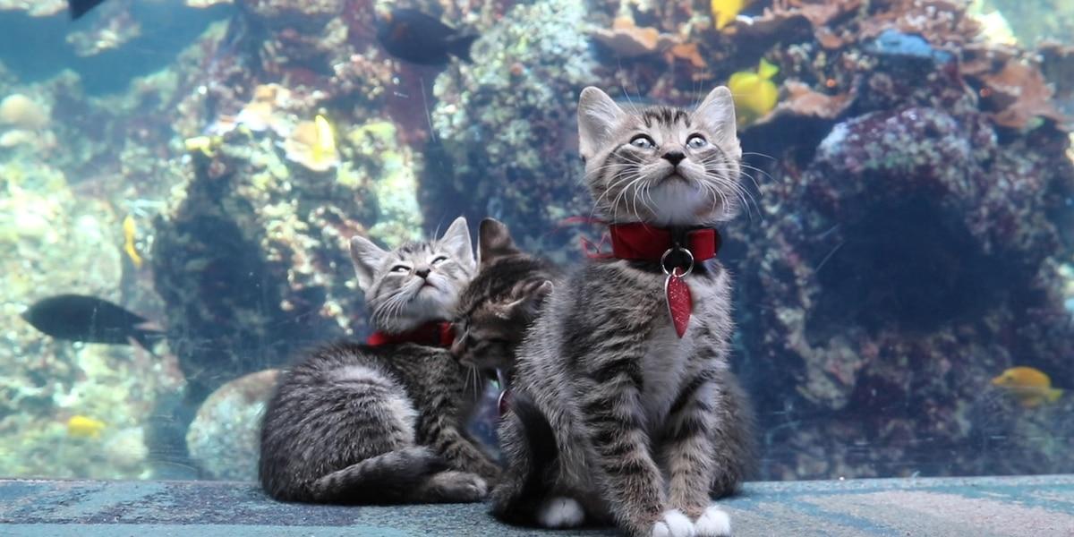 Kittens take over Georgia Aquarium