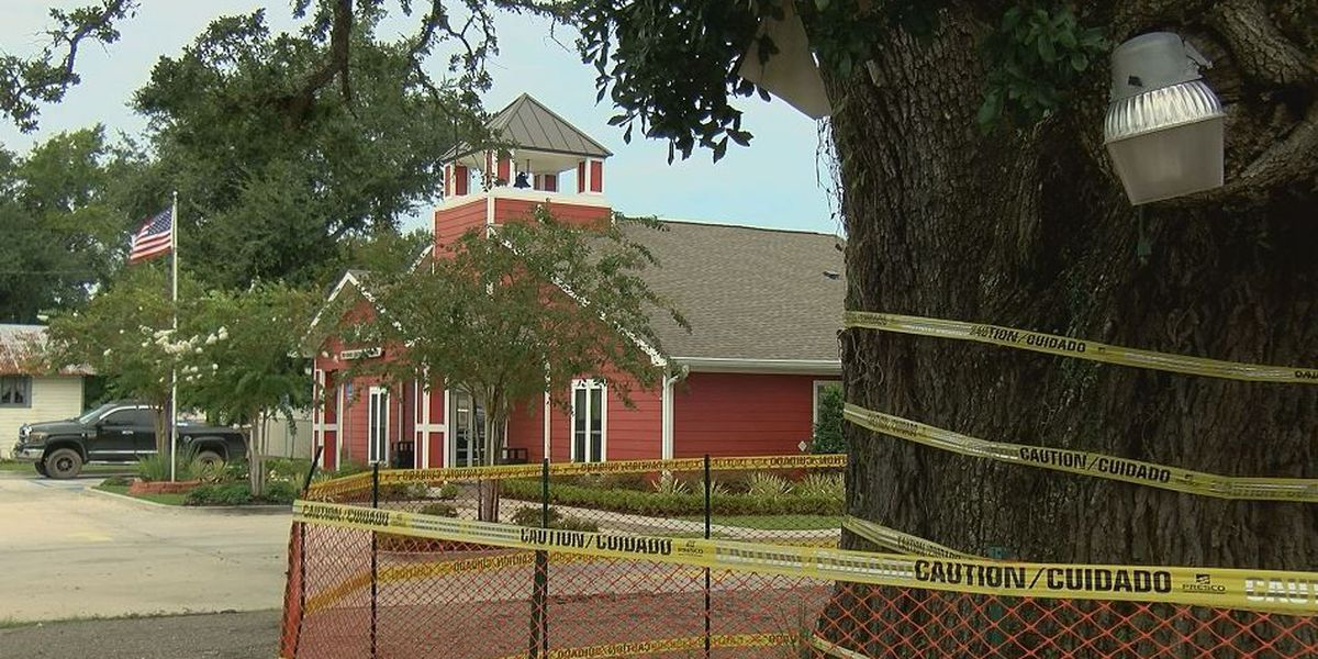 Gulfport business owner says live oak is a danger