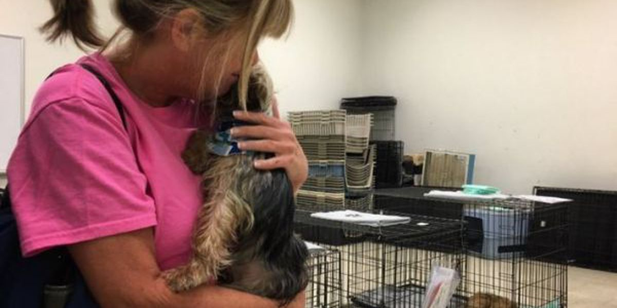 18 rescued Yorkies adopted in Gulfport
