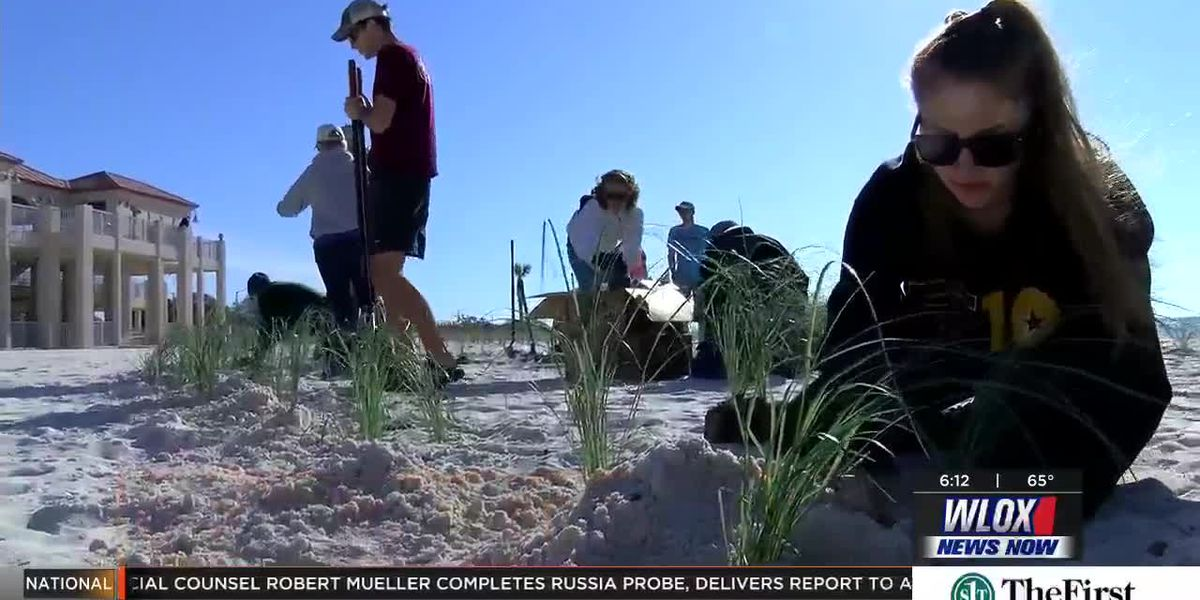 Locals plant sea oats for school, beach erosion defense