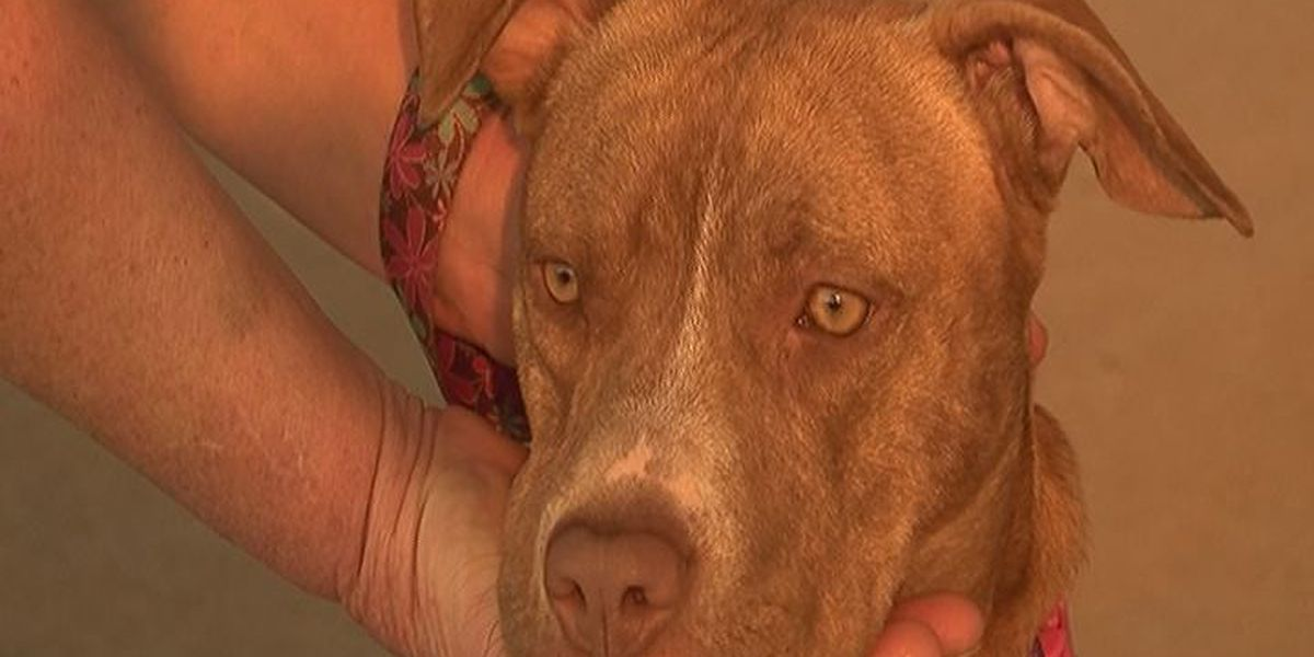 Rescued pitbull hound mix provides new lease on life to veteran