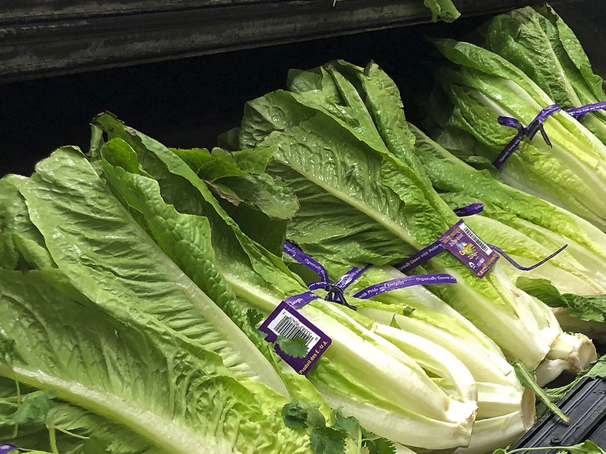 Number of E. coli cases connected to romaine lettuce grows
