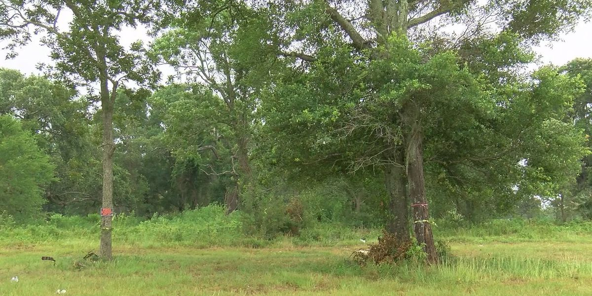 Tree removal approved for planned beach front RV resort