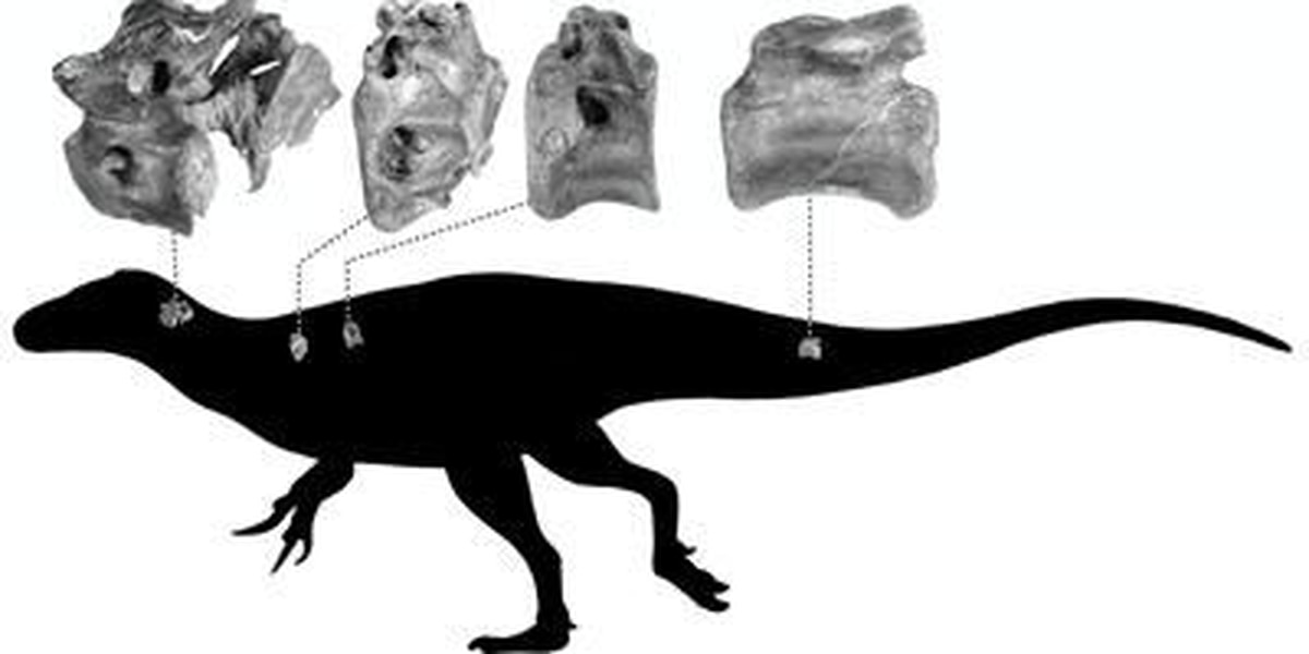 New species of dinosaur discovered on Isle of Wight