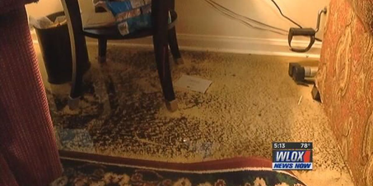 Biloxi apartment residents caught off guard by flooding