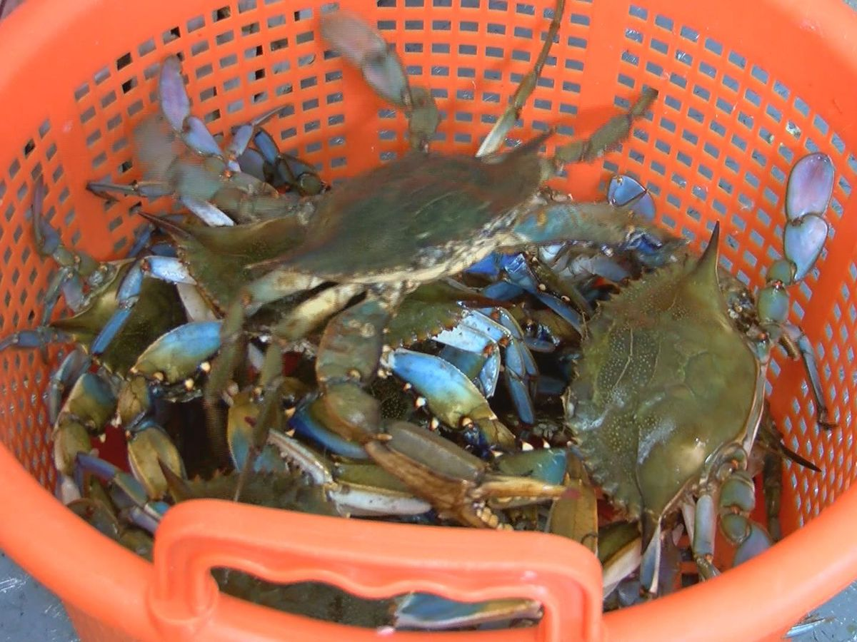 Crab claws, shrimp and fish see rising prices along the Gulf Coast