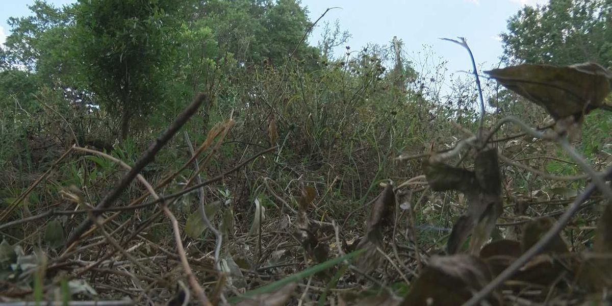 Gulfport residents frustrated with overgrowth between homes and railroad tracks