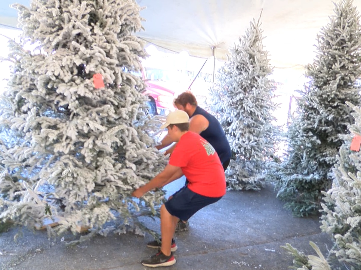 Things to know when searching for, maintaining the perfect Christmas tree
