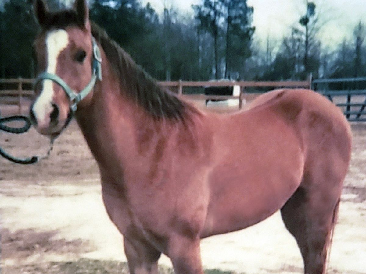 Police searching for dog after horse is killed in Gautier