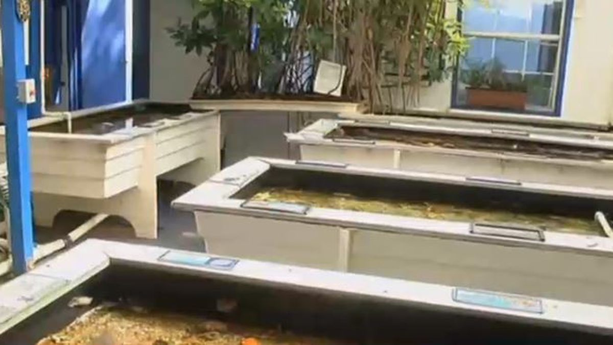 Man rushes to save sea life at marine lab after oxygen pumps fail during Hurricane Michael