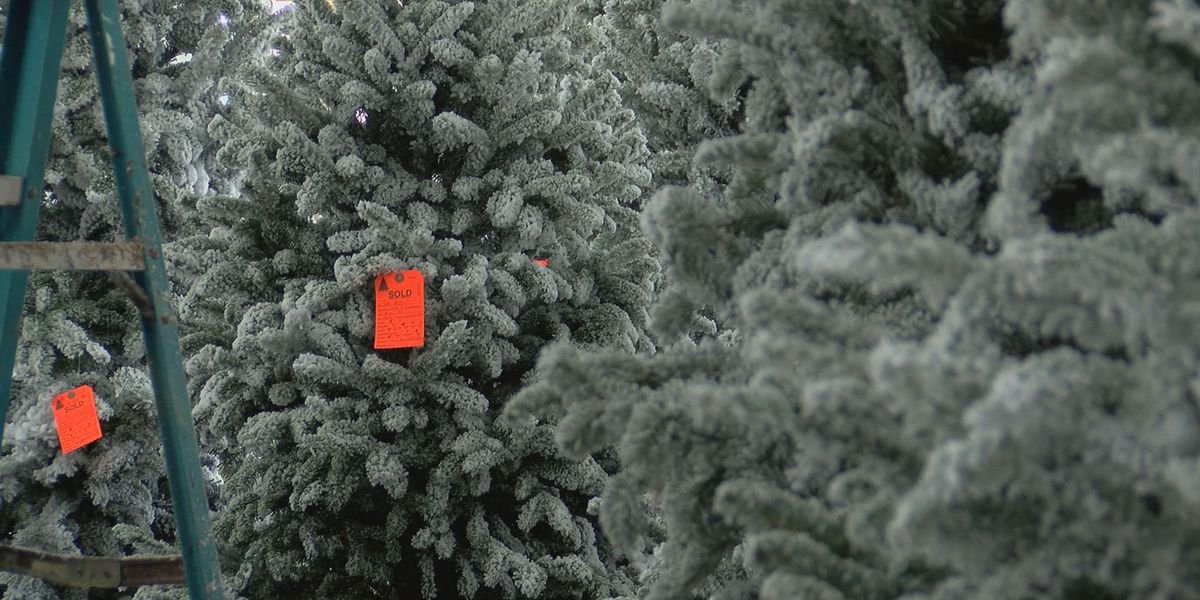 Coast Christmas tree lots see high demand but tight supply