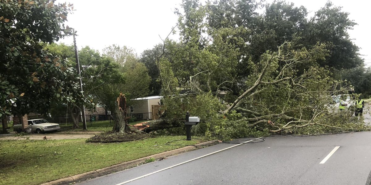 Hurricane Sally causes downed trees, power outages in parts of South Mississippi