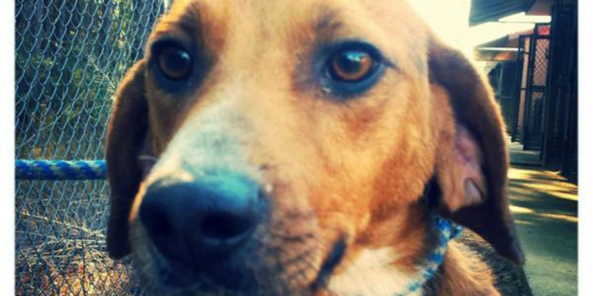 Animal shelter sees increase in drop-offs