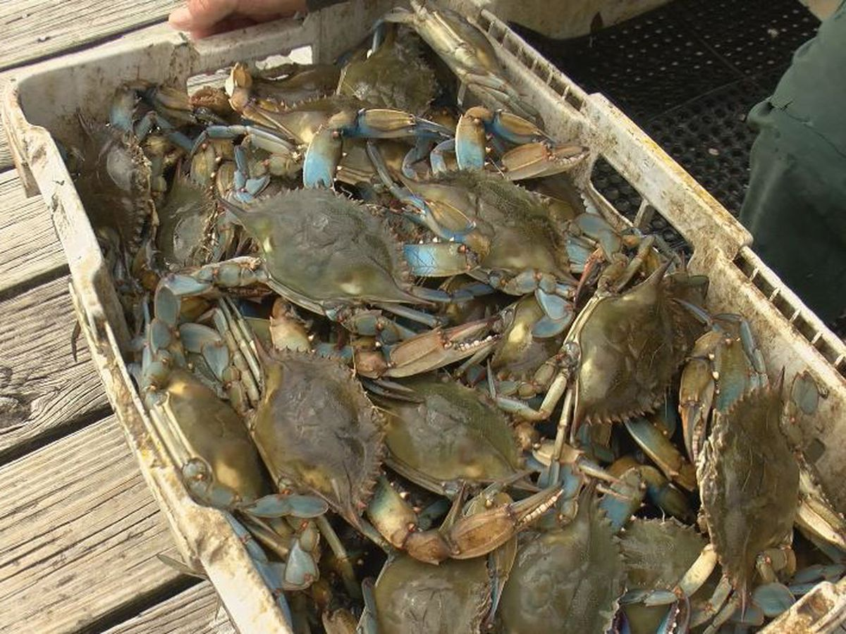 Crab industry taking a hit from coronavirus pandemic
