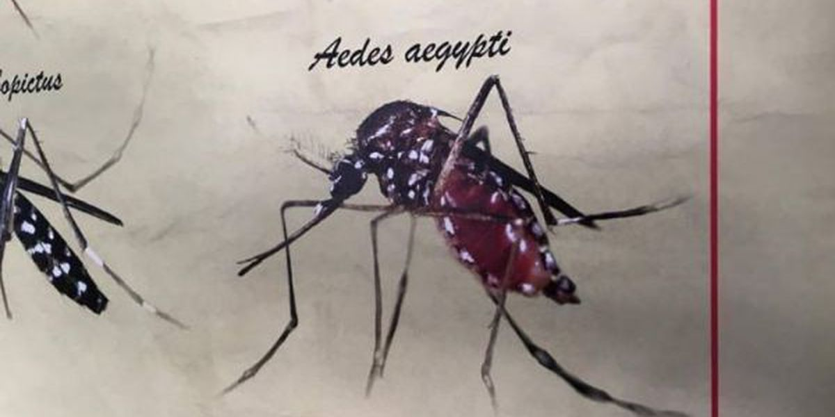 Extra efforts underway to trap Zika-linked mosquito in Harrison Co.