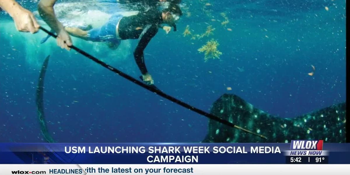 USM Ocean Science school starting Shark Week social media campaign