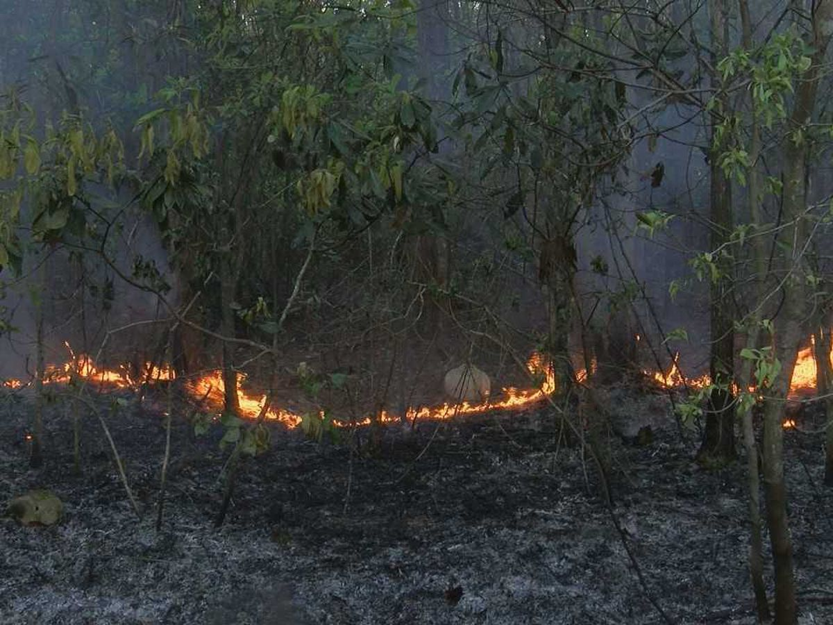 Three-day forest fire soon to be extinguished in Hancock County