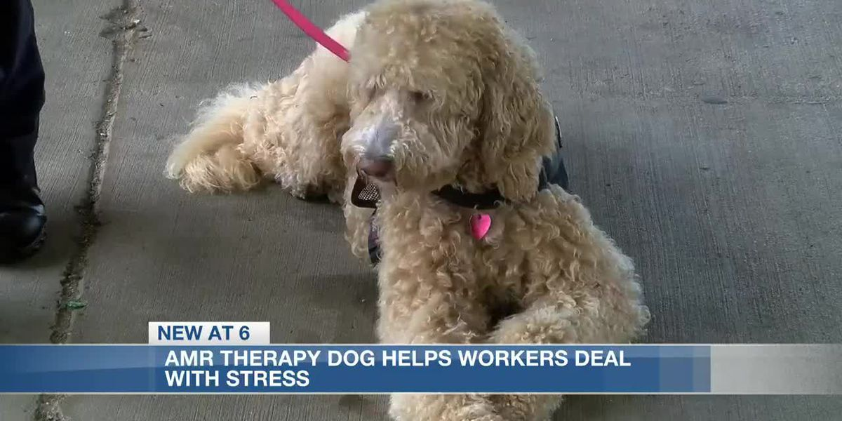 AMR therapy dog helps first responders deal with job stress