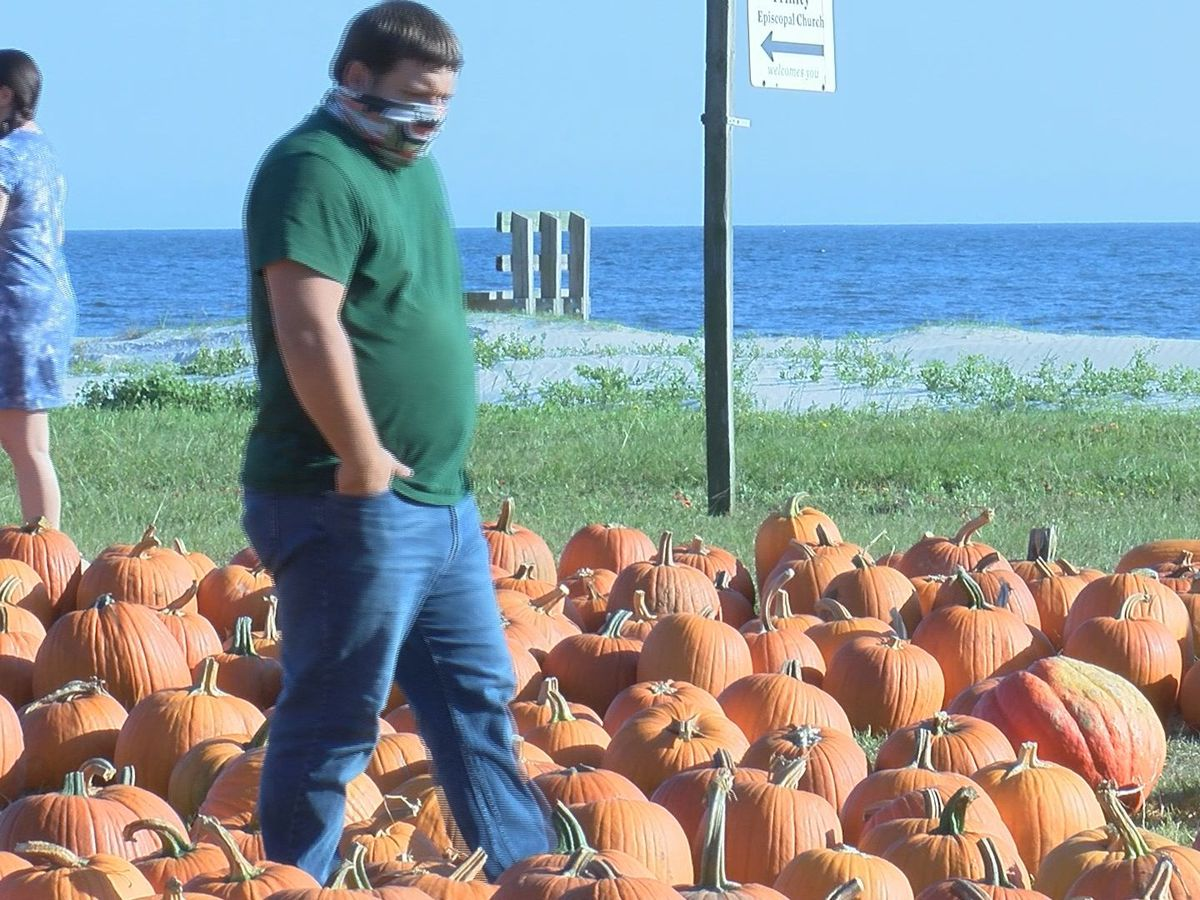 Beachside pumpkin patch in Pass Christian prepares for Zeta