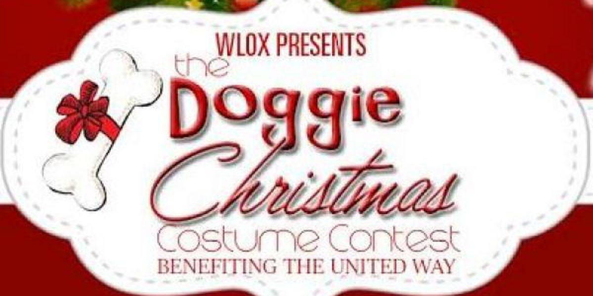 Vote for the best dressed Christmas pooch