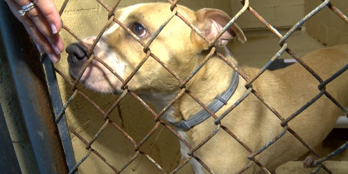 Suspect in 2018 George County dog fighting ring bust headed to trial