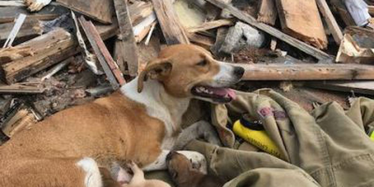 Biloxi firefighters rescue 5 dogs from building