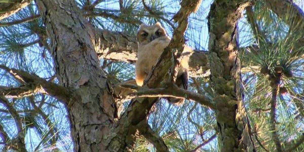 Birder tourism potential high in South Mississippi