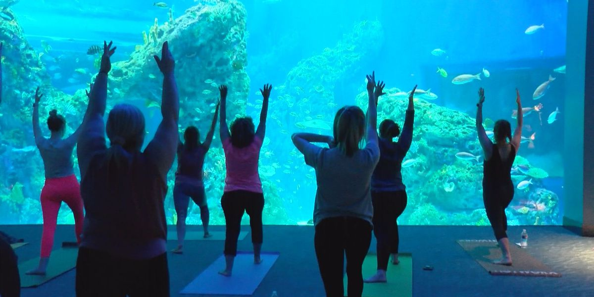 Group enjoys Mother's Day yoga at Mississippi Aquarium